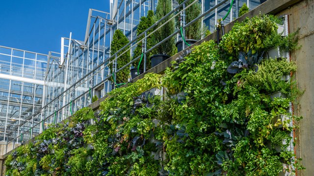 Pittsburgh conservatory showcasing vertical gardening