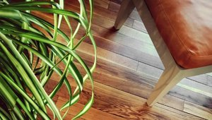 Guide to Environmentally Friendly Wood Flooring
