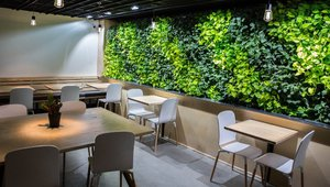 Video | Indoor living wall livens up coffee café