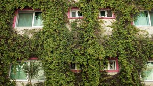 Living walls can play significant role in tackling toxic air hot spots