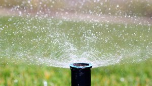6 ways to reduce spring outdoor water use