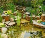 Rainwater harvesting in an aquatic garden (Slideshow)