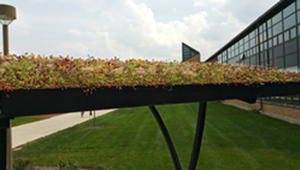 Green roof to help university manage stormwater, reduce carbon footprint