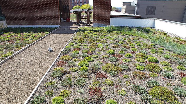 Green roofs help curb polluted runoff, especially with limited space