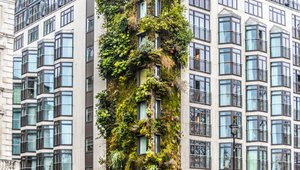 Study backs spread of living walls for polluted cities