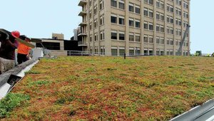 New N.Y. college campus to feature green roofs