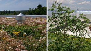 Make sure your green roof is low maintenance