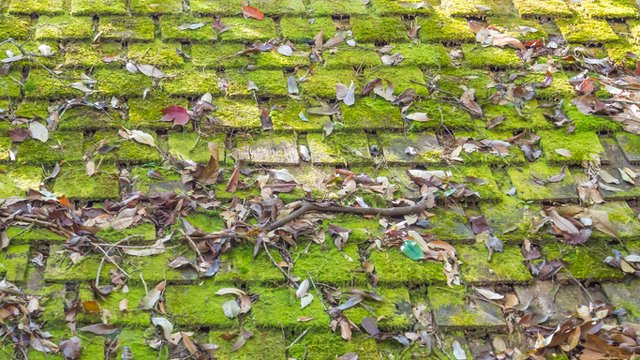 The Benefits of Algae Resistant Shingles