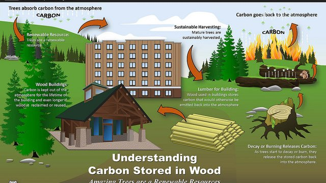 Wood making significant environmental impact on buildings