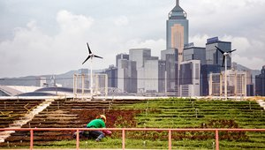 Hong Kong urban farmers find bliss in rooftop gardens